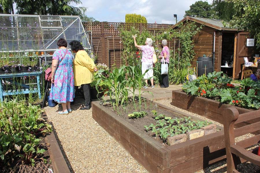 Allotment at Music in the Garden, Freda's Garden