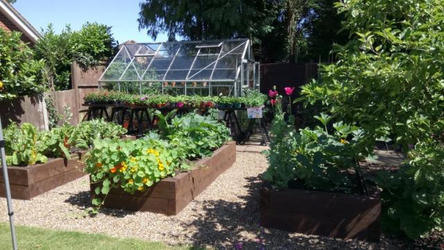 Allotment - Freda's Garden 2017