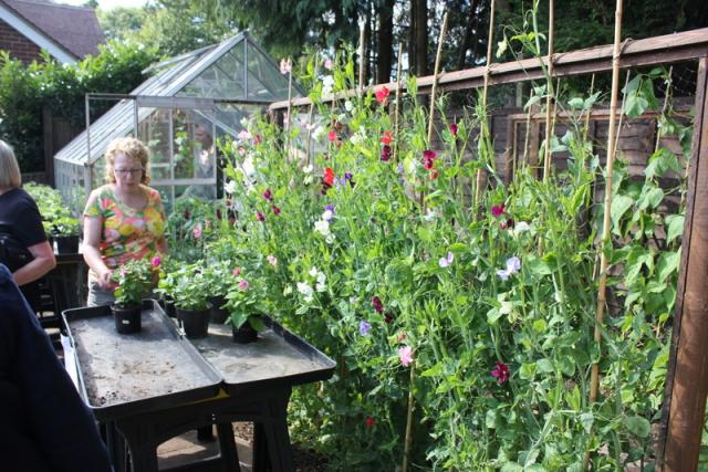 Sweet Peas - Music in the Garden 2017 - Freda's Garden